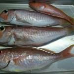 20130323_fish